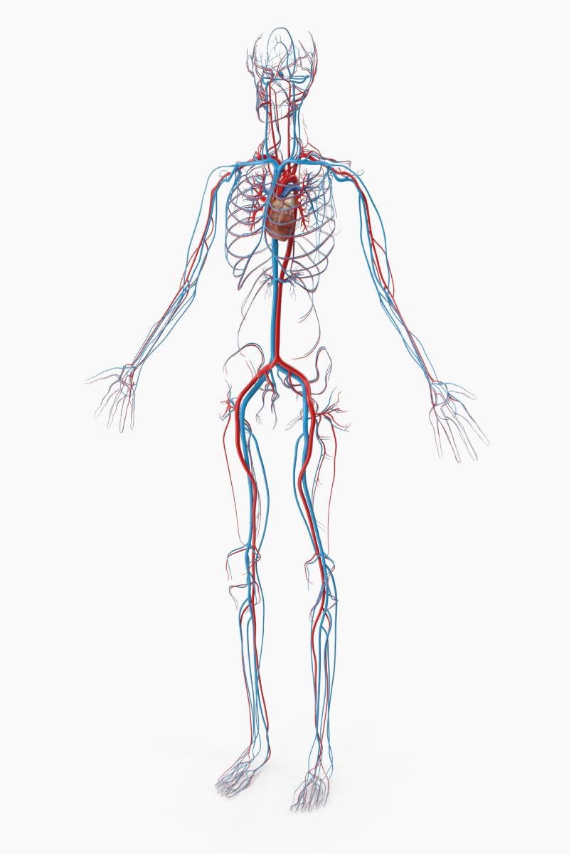 Trattamenti per la cura di patologie di natura cardiovascolare